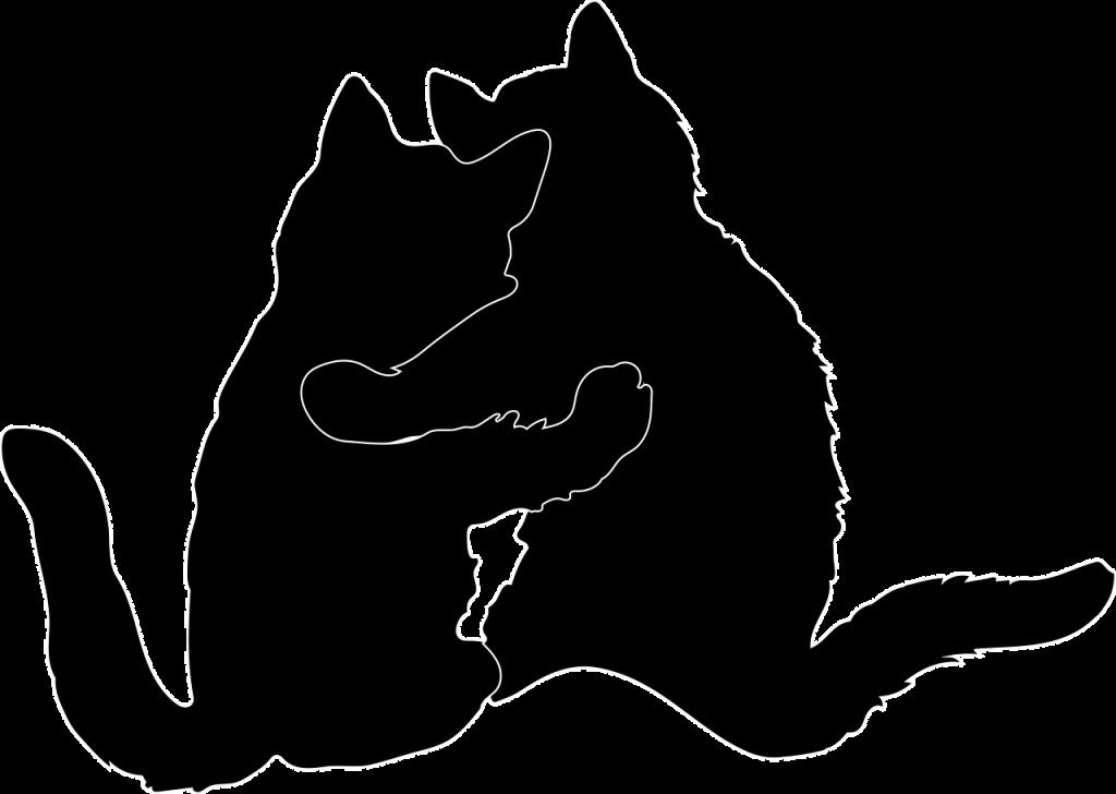 silhuett av to katter